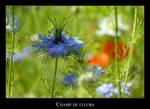 Champ de fleurs by lasaucisse