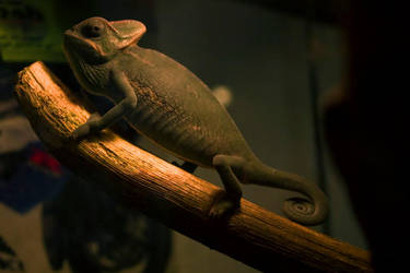 Chameleonic by drzack69
