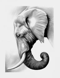Elephant in graphite by Spectrum-VII
