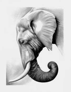 Elephant in graphite by Spectrum-VII