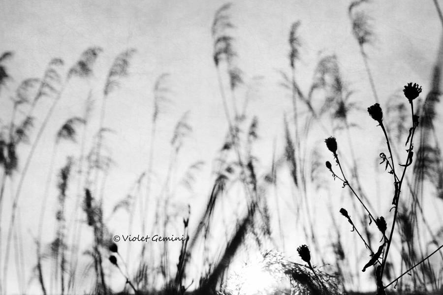 Rebirth | II by KiaraKamra