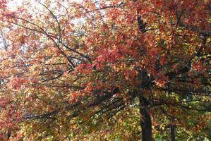 Colors Of Fall by sakura4gaara
