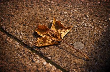 Lost Leaf by IcyCobweb