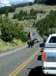 Buffalo on The Road by RakdosS