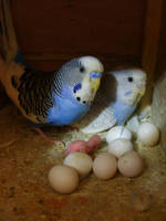 Parakeet Family by hexihash