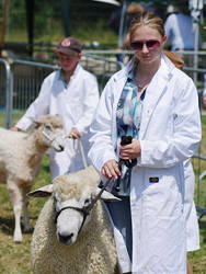 Sheep are serious business by Kuma-no-kimi