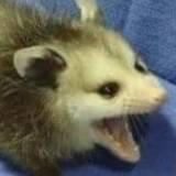 DoctorSiggy's Profile Picture