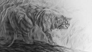 Wild cat by H-A-R-P-A-G-O-N
