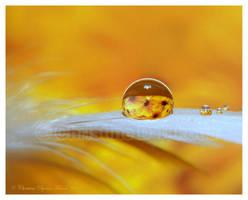 sun flower2 by dini25