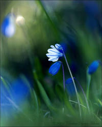 blue by dini25