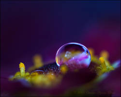 colourful flower drop 2 by dini25