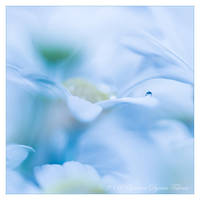 tiny drop by dini25