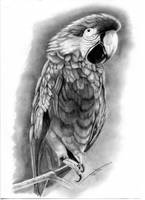 Polly by Rockinfroggi