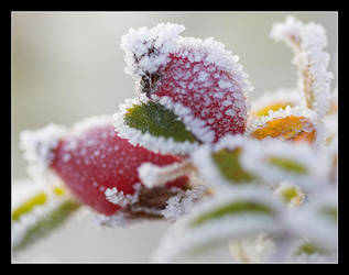 Frosty Berries by PeteLatham