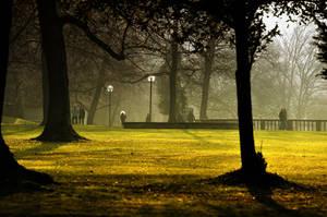 golden light by ncavee