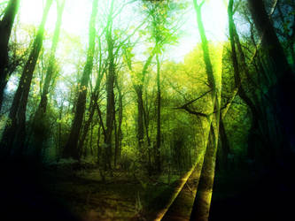 Forest dream by coldap