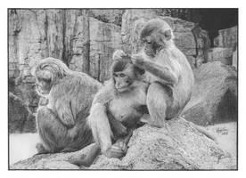 'Primatas' Graphite Drawing by pesterhugo