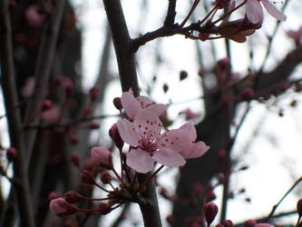 April Flowe 4 by mebeme14