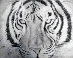 The Tiger's Gaze by Slightly-Spartan