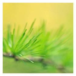 Ce printemps by Fant0me