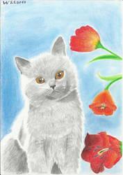 Little Grey Kitty by Felina180
