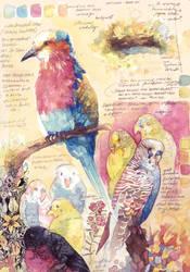 Bird studies #2 by PaperandDust