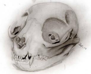 Catskull by RockValley