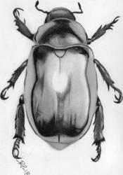 Escarabajo by RockValley