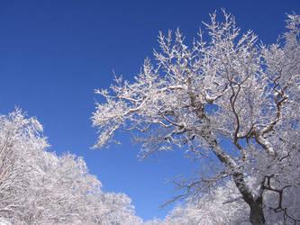 frozen, beautiful by Erdaron