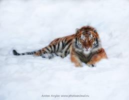 Snow-cat by Jagu77