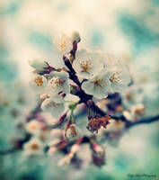 Just a Memory of Spring VII by MyLifeThroughTheLens