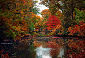 Memories of Autumn by MyLifeThroughTheLens