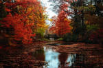 Colorful November by MyLifeThroughTheLens