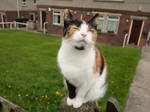 Curious Cat by BenjaminArmstrong