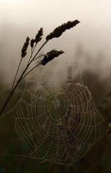 Web by scotto