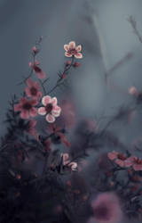 Grey pink flowers by Emeraldea