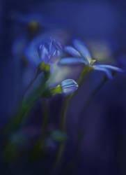 Blue flowers by Emeraldea