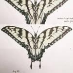 eastern tiger swallowtail (f) by JuleeMClark
