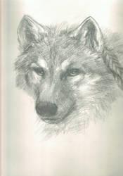Amual wolf by PurpleHope
