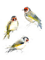 Goldfinches I by amwah