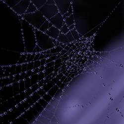 SpiderLeftItsForm by AnaViegas
