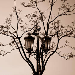 Chandeliers on Trees by AnaViegas