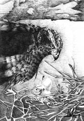 Eagle by makthedragon76