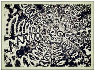 Spider / Octopus by OttoMagusDigitalArt