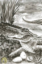 Animals: Crocodile by Naikiria