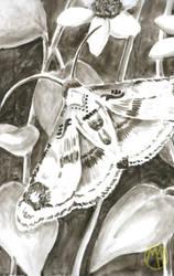 Animals: Moth by Naikiria