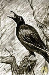 Animals: Crow by Naikiria