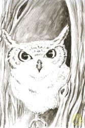 Animals: Owl by Naikiria