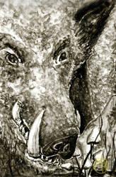 Animals: Wild pig by Naikiria