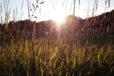 Sunrise by reixii